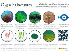 Guía de identificación acuática de las principales especie sinvasoras del Mediterráneo