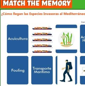 matchmemorycomolleganespeciesinvasora